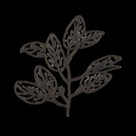Handdrawn-Leaf-27.png