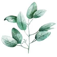 Leaf-14.png