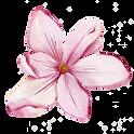 Magnolia-5.png