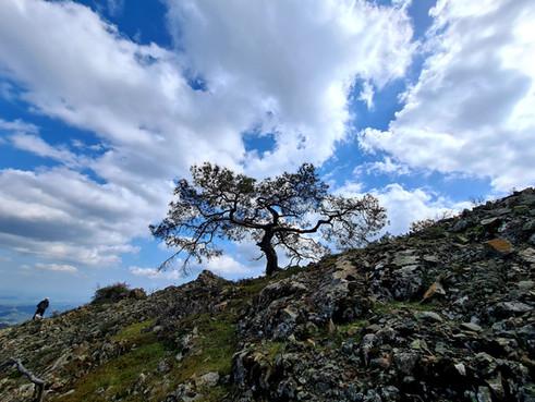 Trail Drys - Kionia