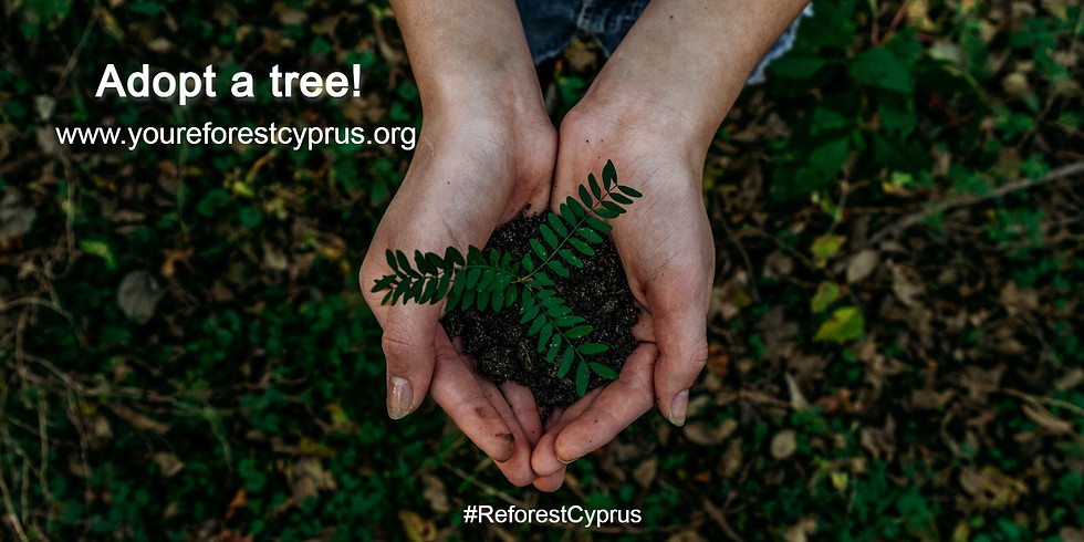 Reforest Cyprus