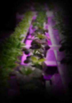 horticulture-light-hp.jpg