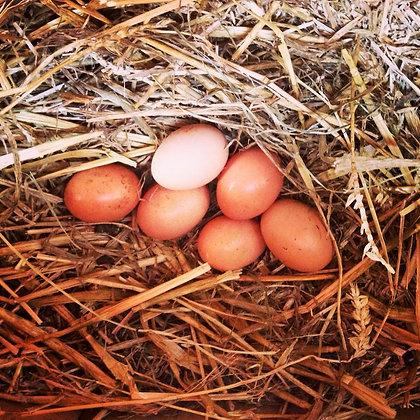 Freerange eggs