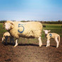 Lambing Event THIS WEEKEND