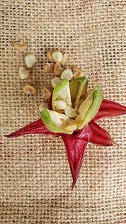 Roselle seeds.jpg