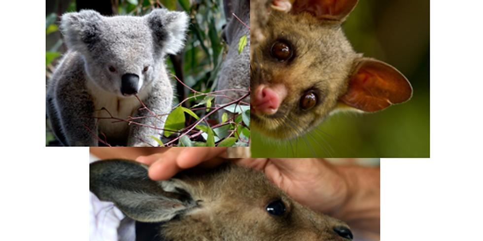 AAA Crafts (Assisting Australian Animals)