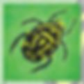 12x12_Beatle_bug.png
