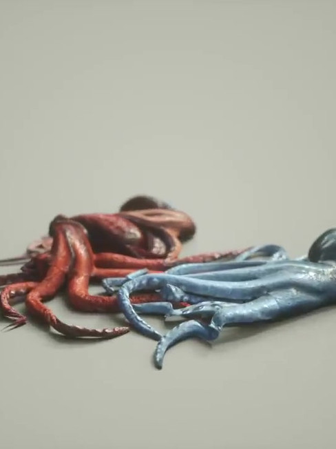 An octopus has three hearts, nine brains and blue blood