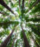 Trees The Spreading Tree Retreat