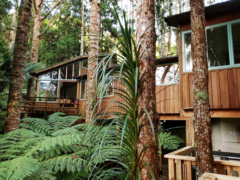 Our Kauri trees.jpg