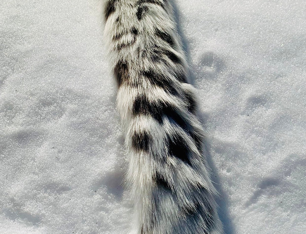 Glowing Leopard Fursuit Tail: Ready to Ship