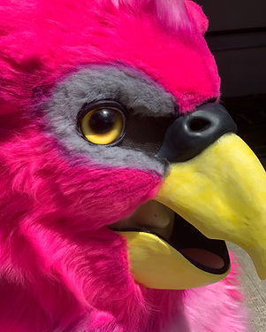 Custom Furuit Head Commission of a pink budgie with realistic eys and airbrushing.