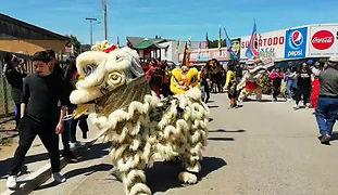 Carnaval de 10 leones chinos en Cahuil, sexta región de Chile, noviembre 2018