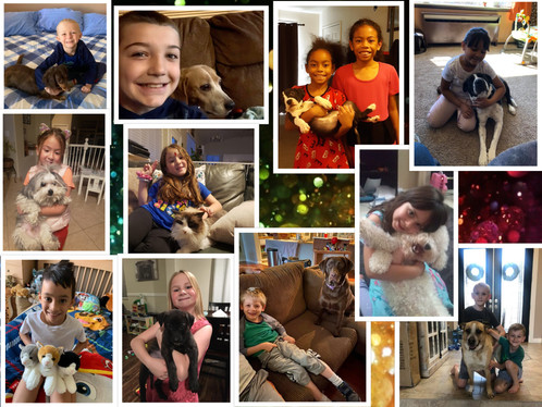 FB Pets Collage.jpg