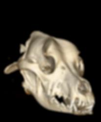 томография собаки, ветеринарная клиника