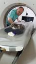 Ветеринарная компьютерная томография: точная диагностика сложных заболеваний