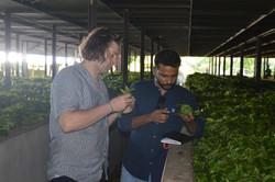 Tea Garden Inspection