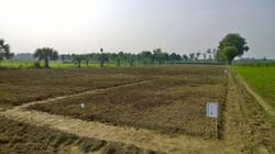 Trial Field Organic Farming