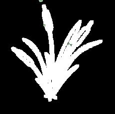 St.JamesPlantation-WHITE.png