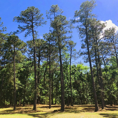 Lovely Wooded Homesite in St James - 2954 Legends Drive, Southport, NC - SOLD