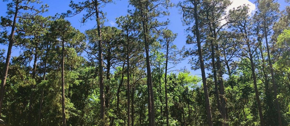 Lovely Wooded Homesite in St James - 2954 Legends Drive, Southport, NC