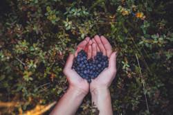 Blueberries (1).jpg