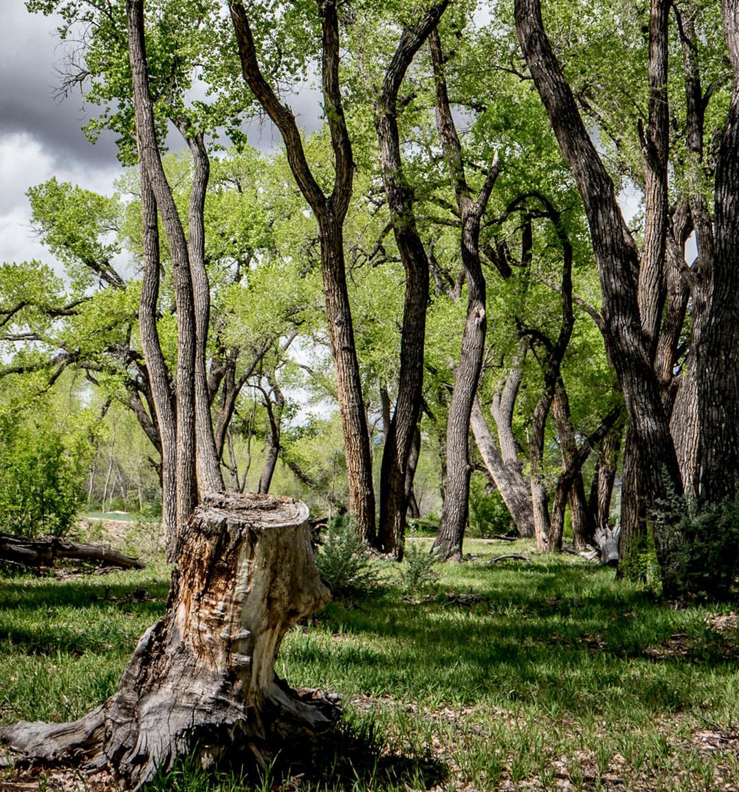 Siddho-Photography-Nature-C-18.jpg