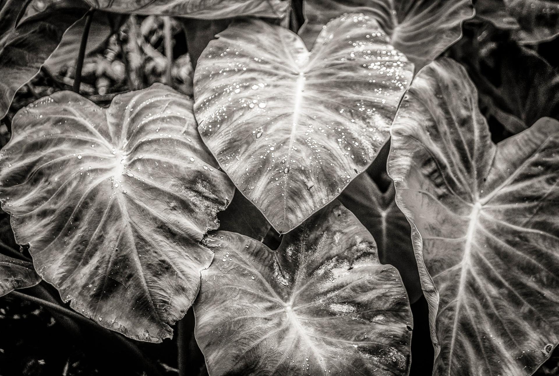 Siddho-Photography-nature-BW-9.jpg