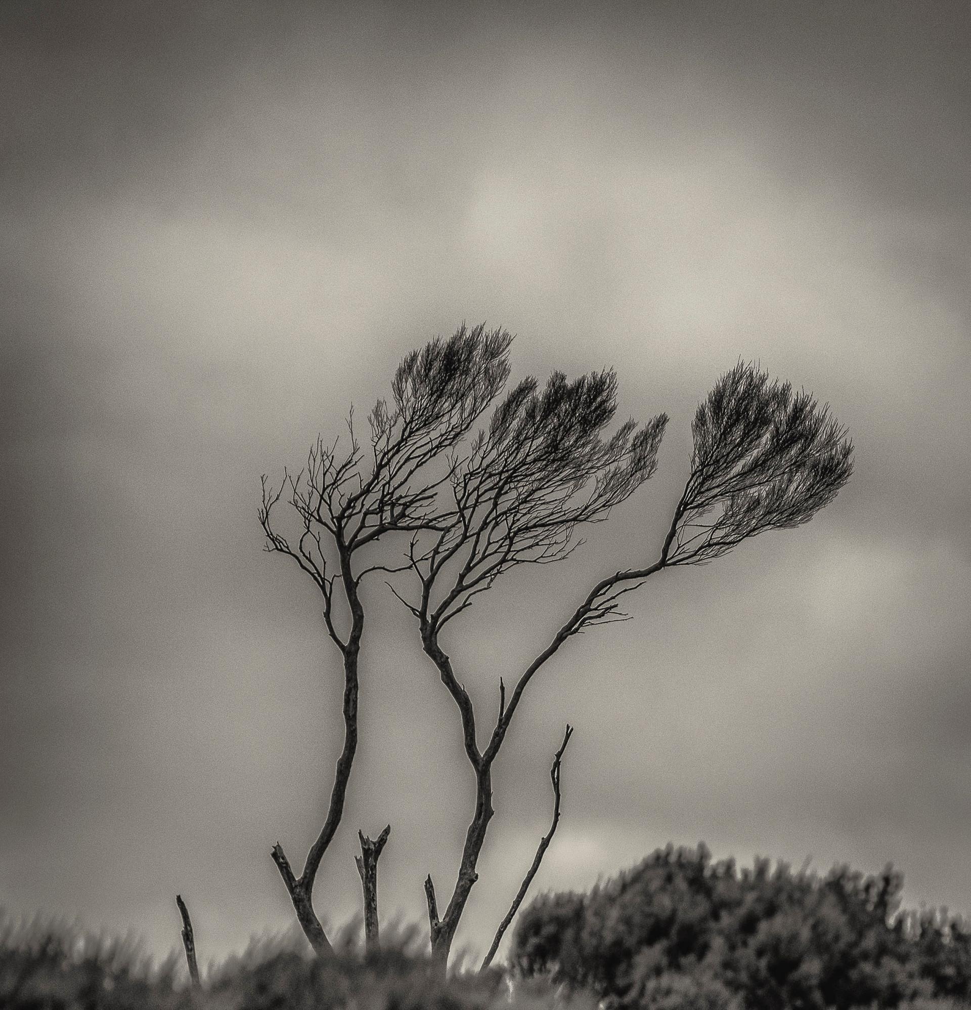 Siddho-Photography-WS-BW-11.jpg