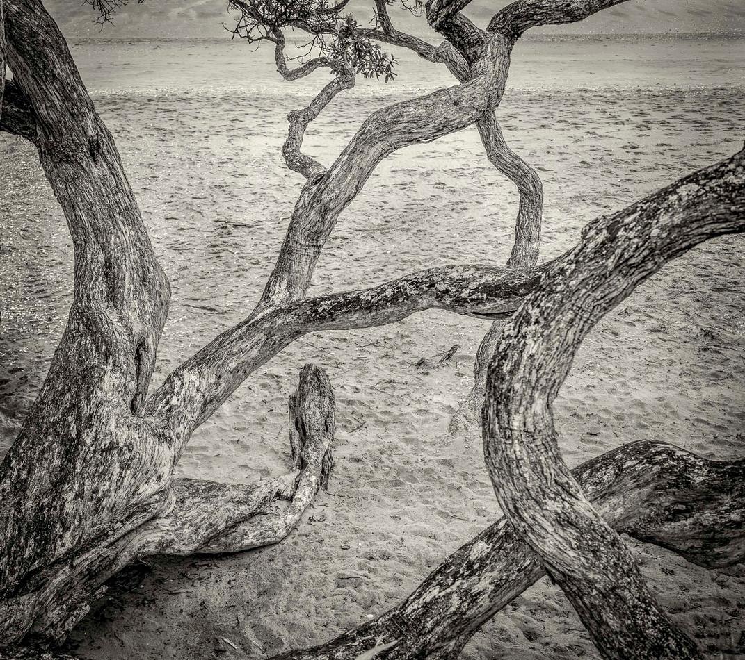 Siddho-Photography-nature-BW-7.jpg