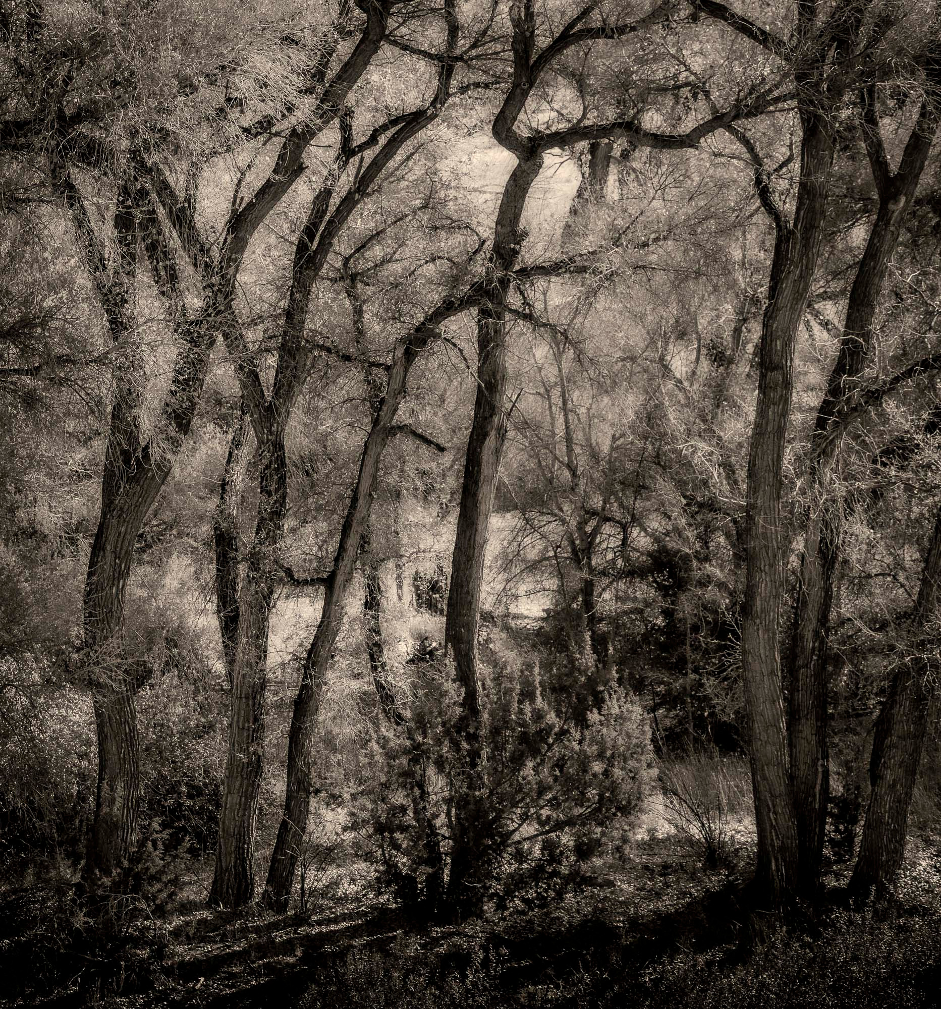 Siddho-Photography-LS-BW-12.jpg