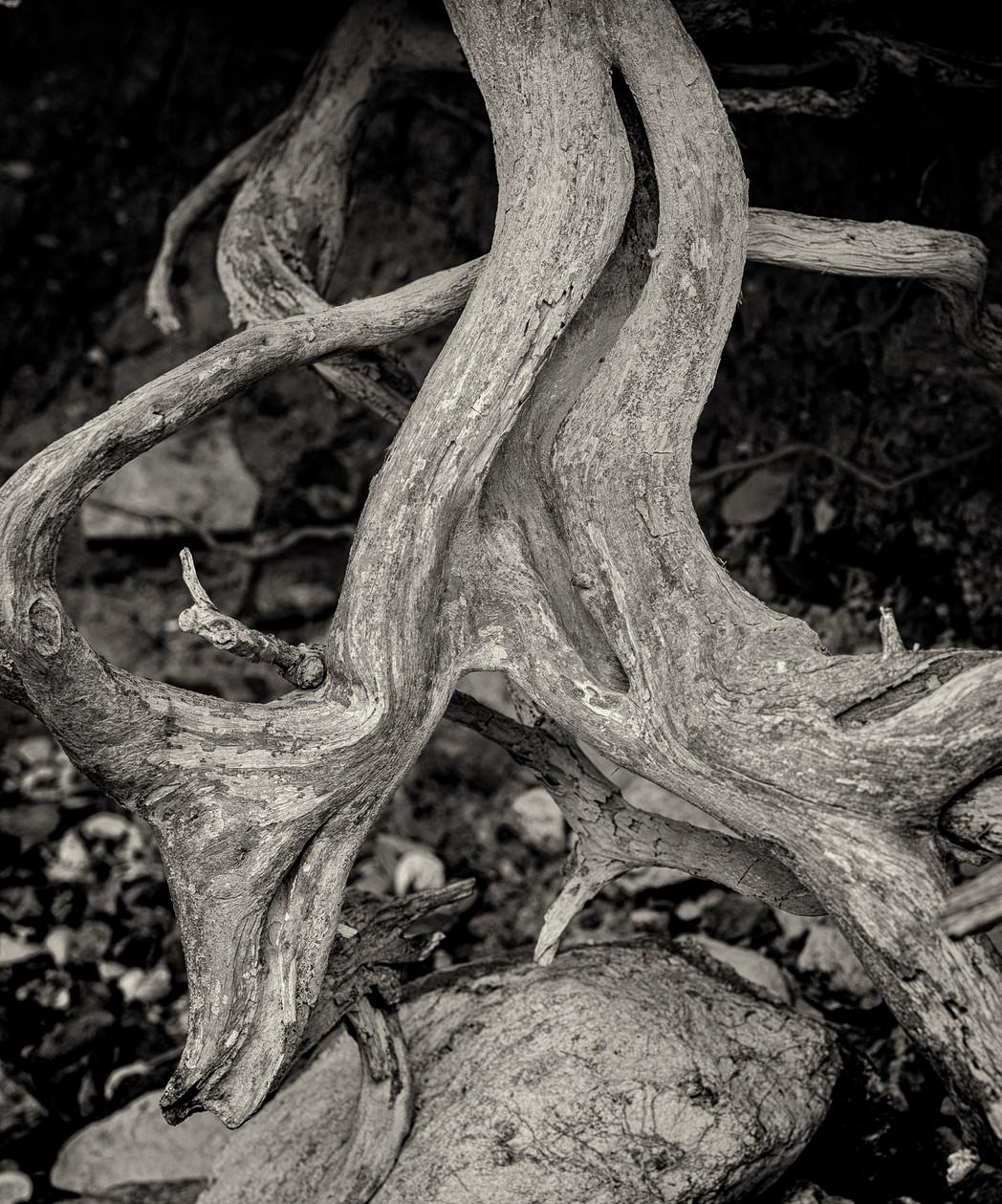 Siddho-Photography-WS-BW-8.jpg
