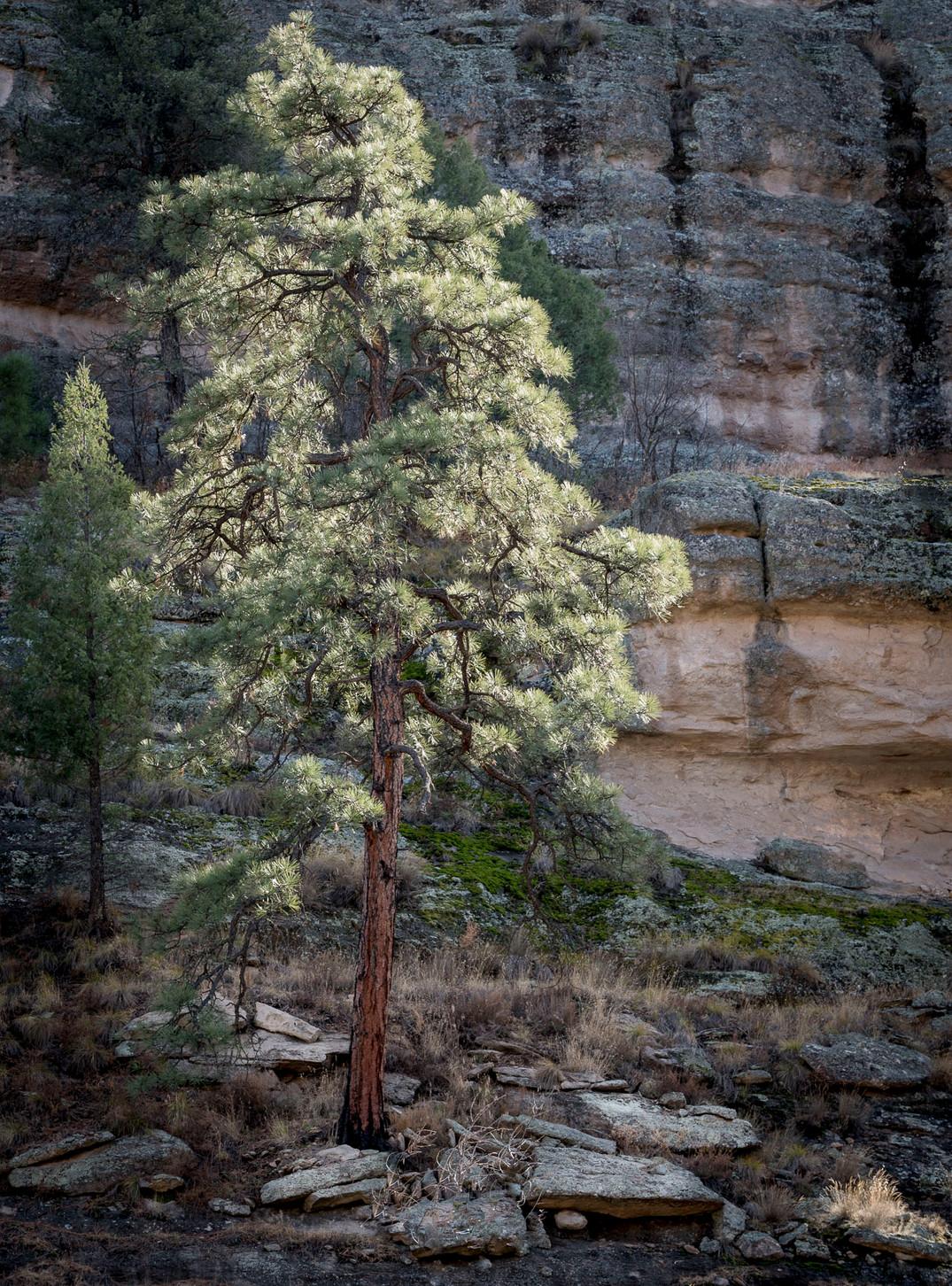 Siddho-Photography-Nature-C-16.jpg
