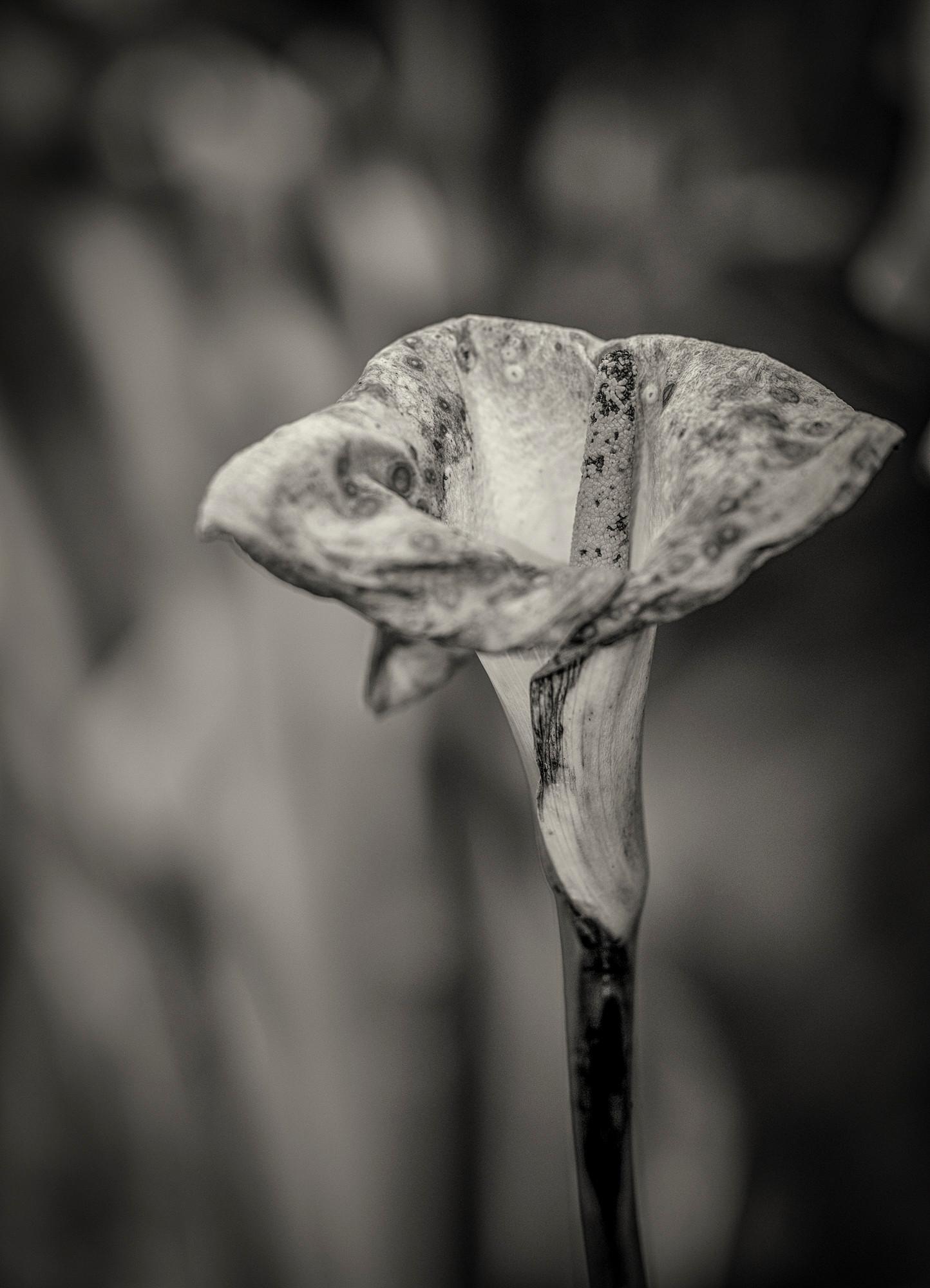 Siddho-Photography-nature-BW-22.jpg