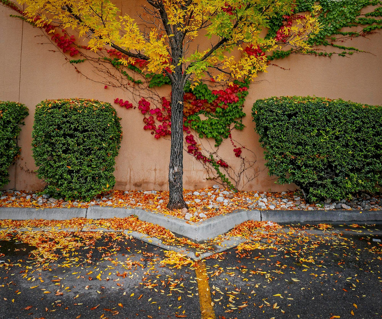 Siddho-Photography-Nature-C-21.jpg