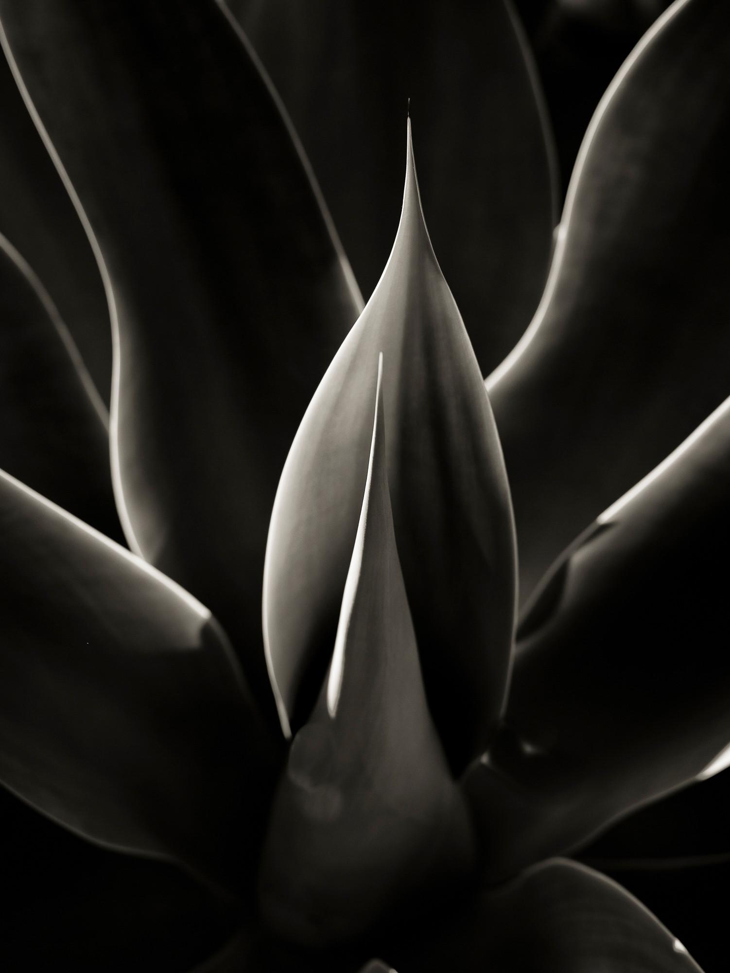 Siddho-Photography-nature-BW-16.jpg
