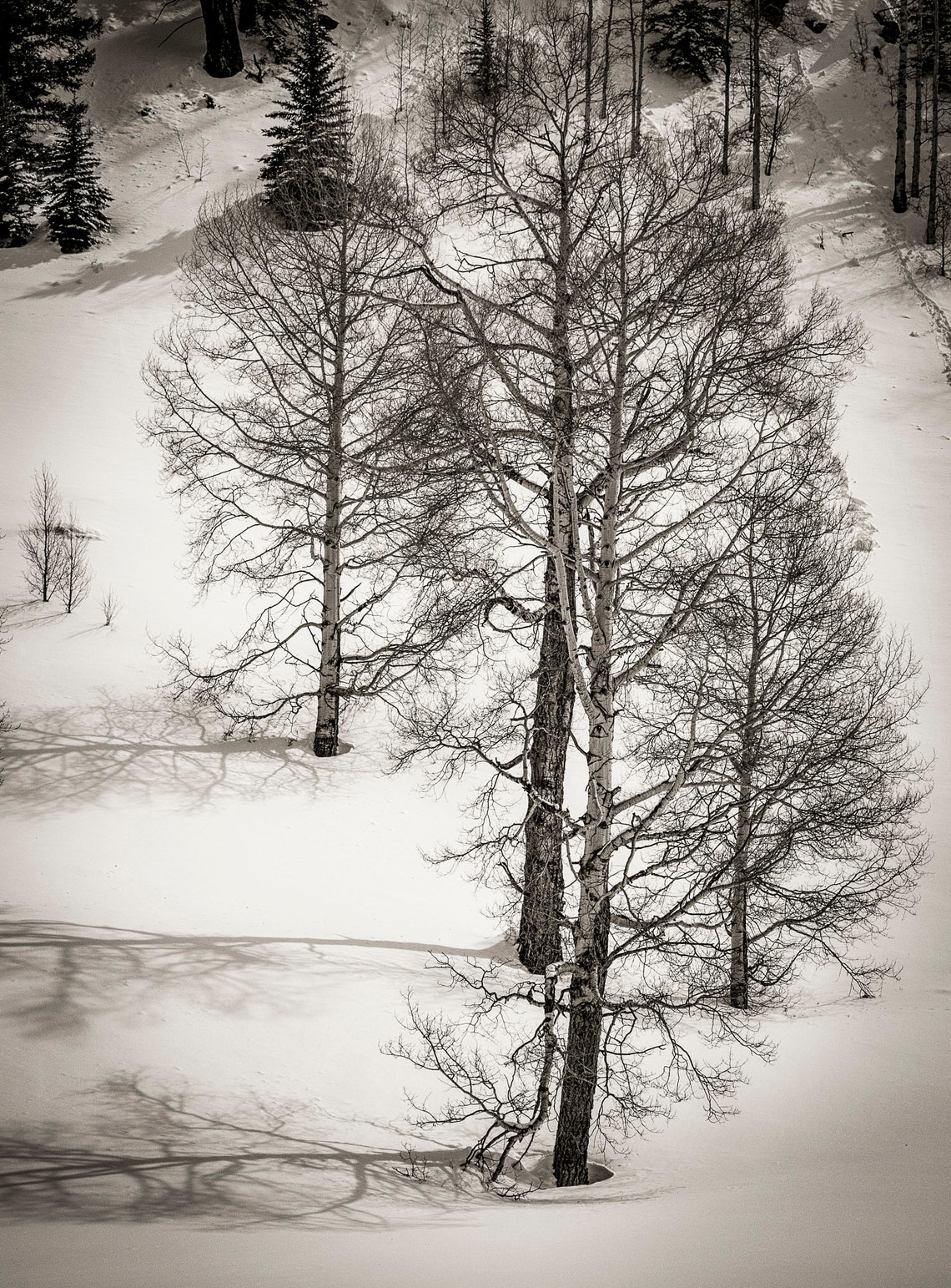 Siddho-Photography-LS-BW-29.jpg
