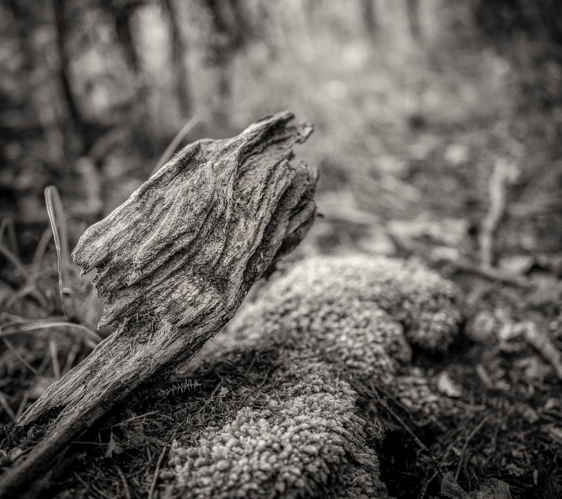 Siddho-Photography-nature-BW-2.jpg