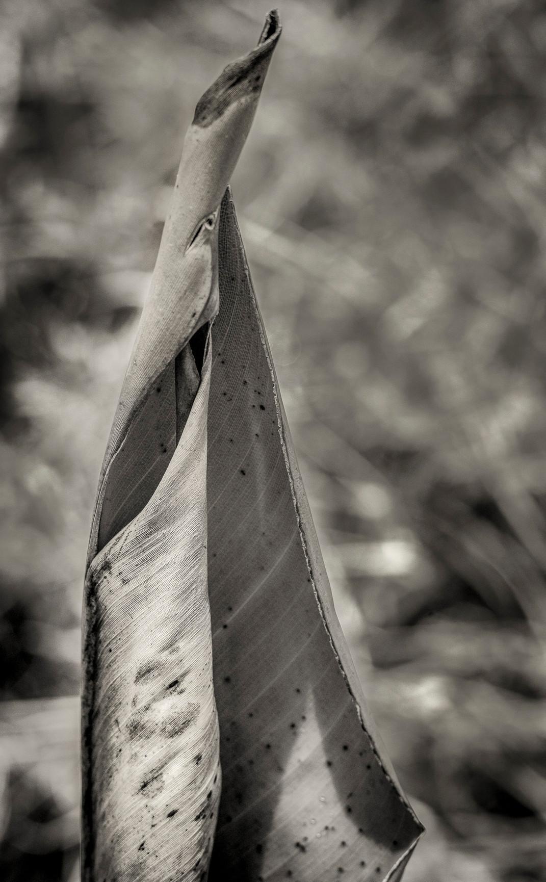 Siddho-Photography-nature-BW-15.jpg