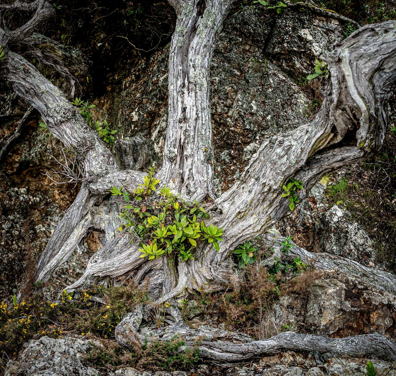 Siddho-Photography-Nature-C-17.jpg