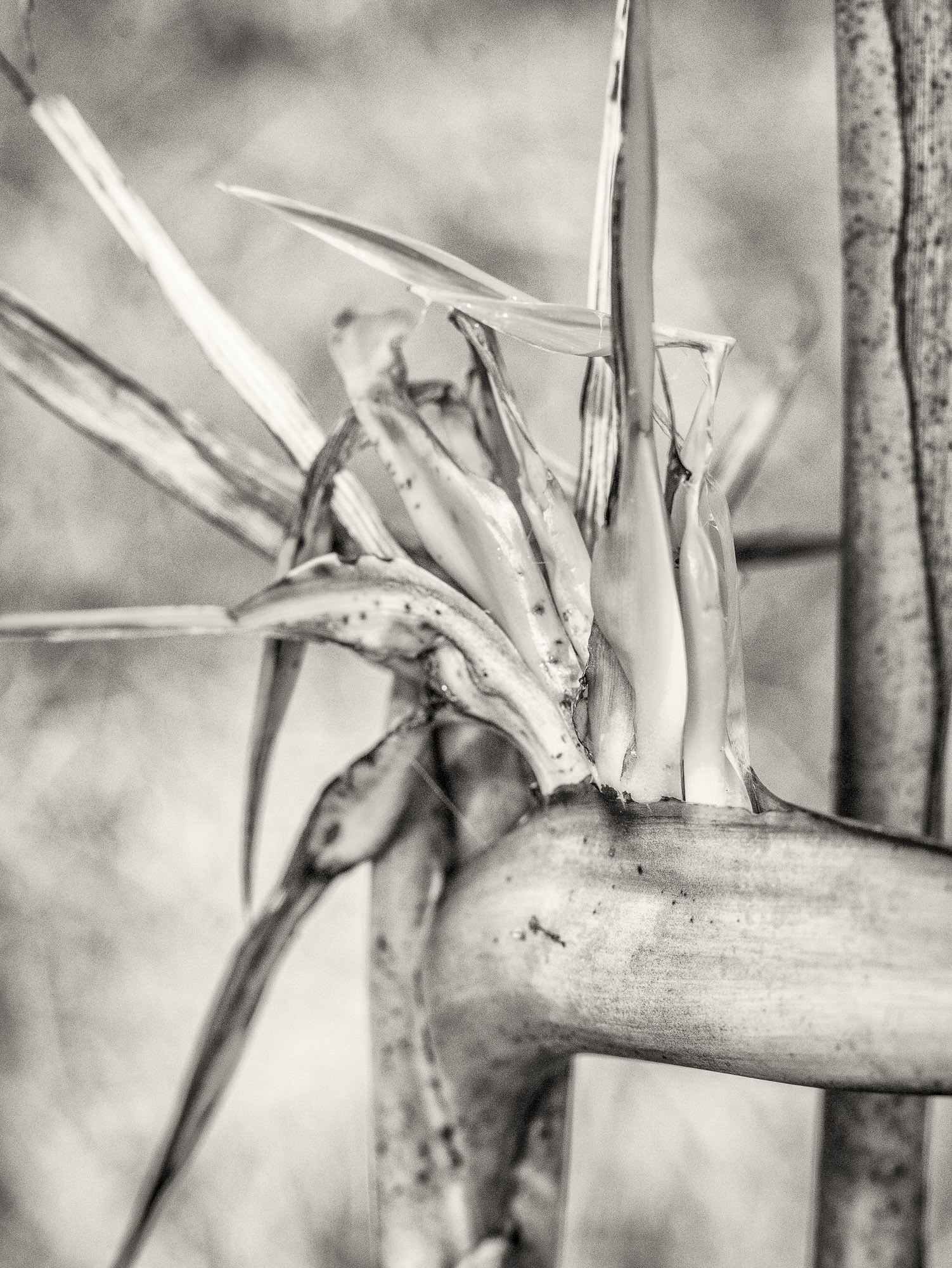 Siddho-Photography-nature-BW-12.jpg