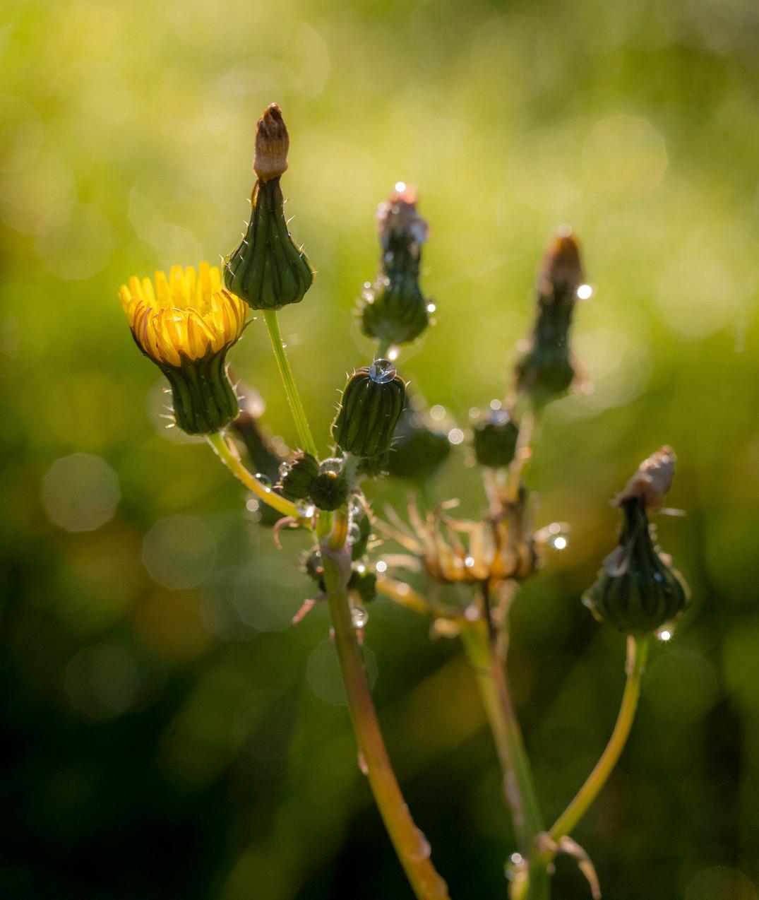 Siddho-Photography-Nature-C-10.jpg