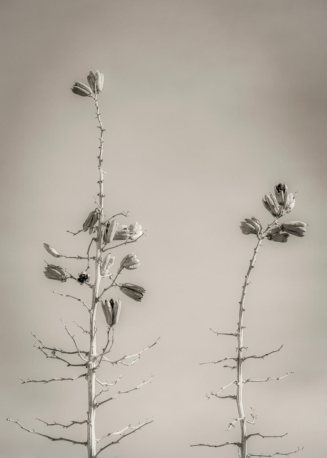 Siddho-Photography-nature-BW-35.jpg