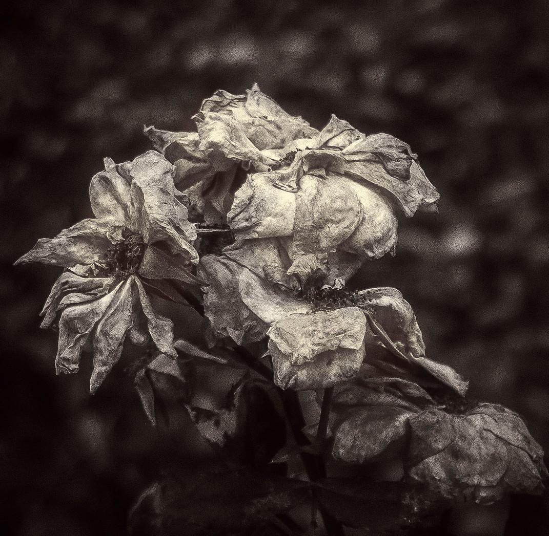 Siddho-Photography-nature-BW-19.jpg