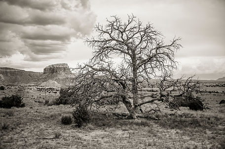 Siddho-Photography-LSBW-17.jpg