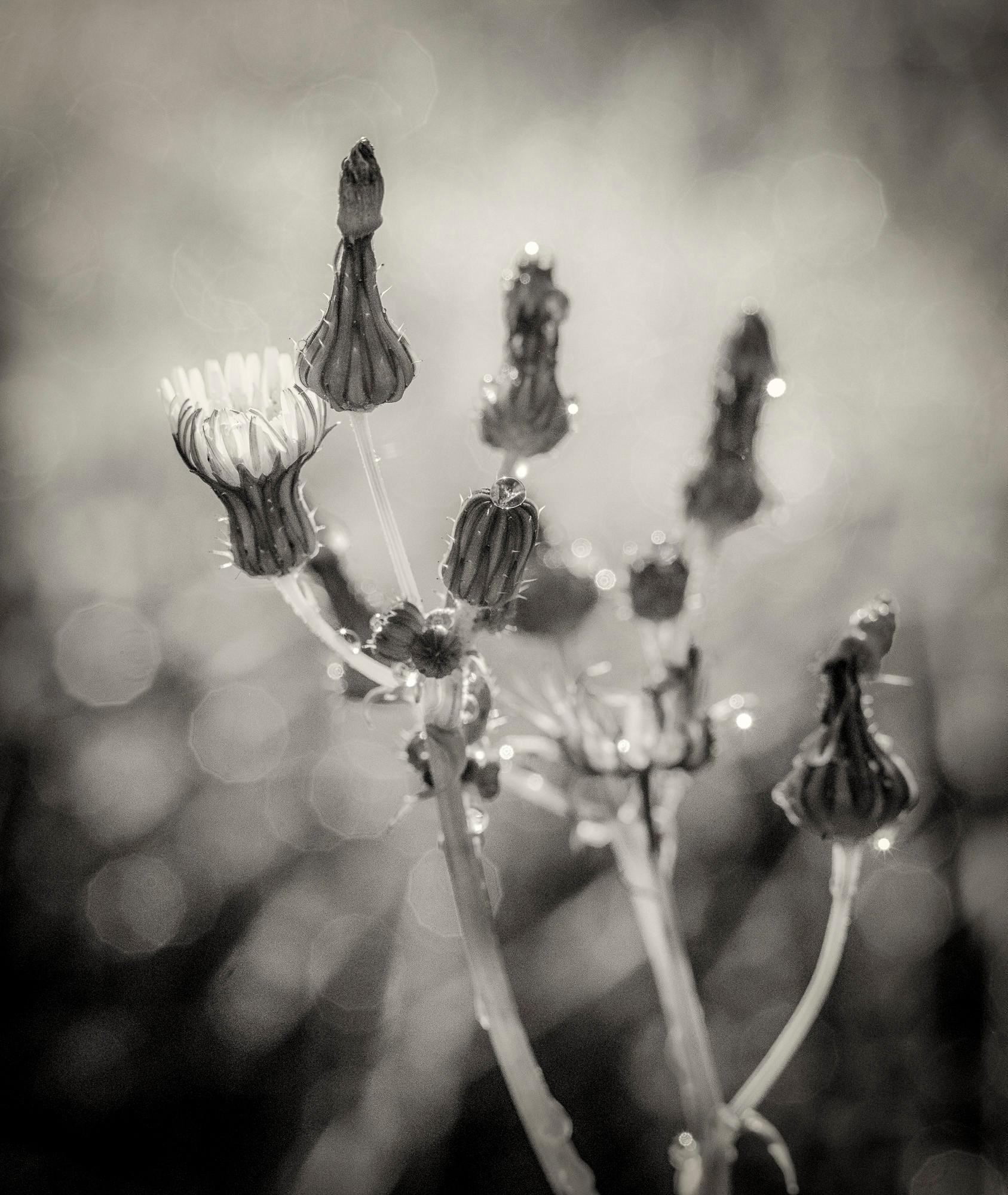 Siddho-Photography-nature-BW-3.jpg