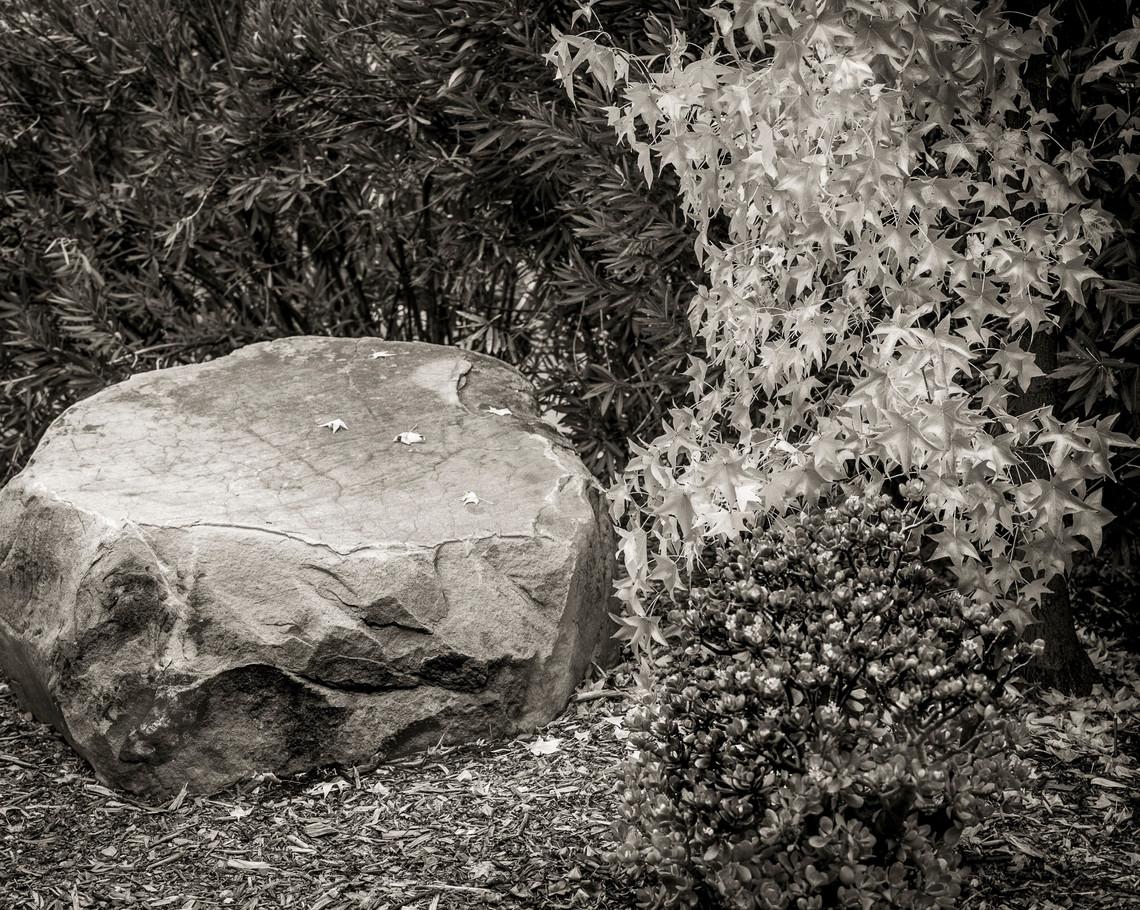 Siddho-Photography-LS-BW-20.jpg
