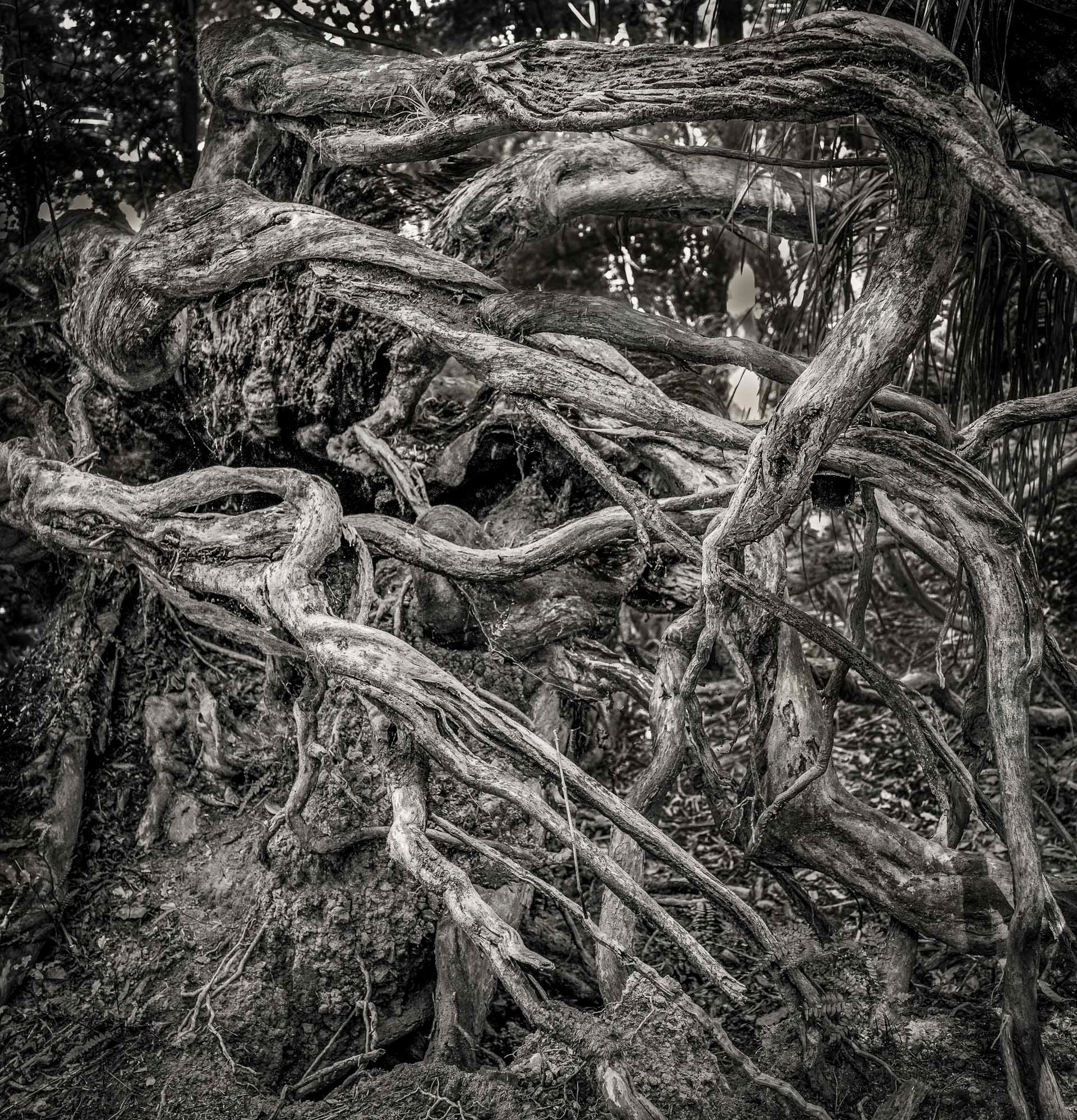 Siddho-Photography-nature-BW-5.jpg