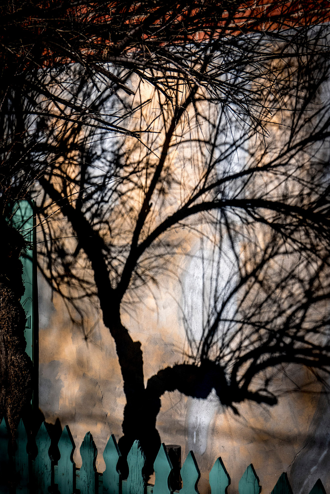 Siddho-Photography-Nature-C-20.jpg