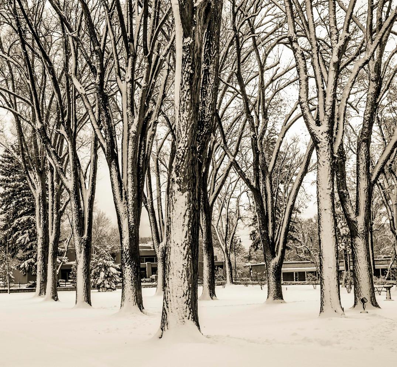 Siddho-Photography-Nature-C-15.jpg